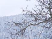 foresta-innevata