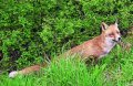 fauna_mammiferi