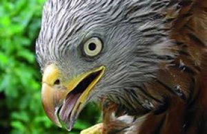 fauna_uccelli